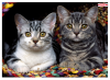 Ednet Mouse Pad With Cats ED64220